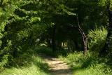 The shady trek, Sultanpur National Park