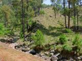 Forest near Dungi