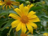 Flowers of Doi Tung, Chiangrai - Thailand