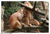 The Bronx Zoo_1522.jpg