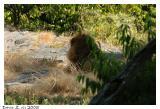 The Bronx Zoo_1535.jpg