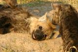 Masai Mara - brotherly love