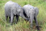 Masai Mara - food always tastes better when u nick it from someone else