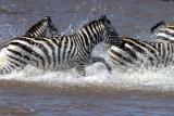 Masai Mara - Zebra crossing!... geddit?