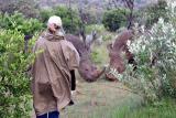 Masai Mara - Rhino spotting