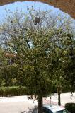 Playa del Carmen yellow jackets in tree 6365