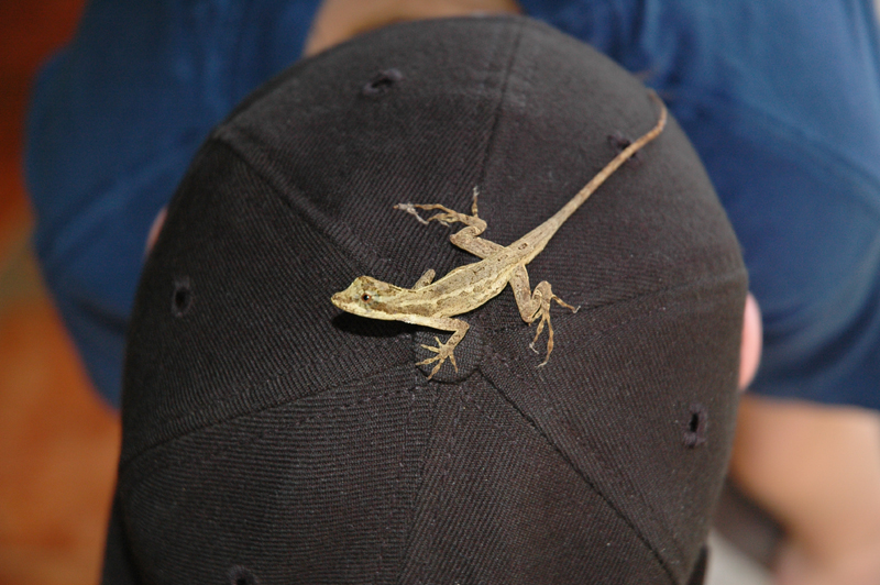 Anole hat ornament