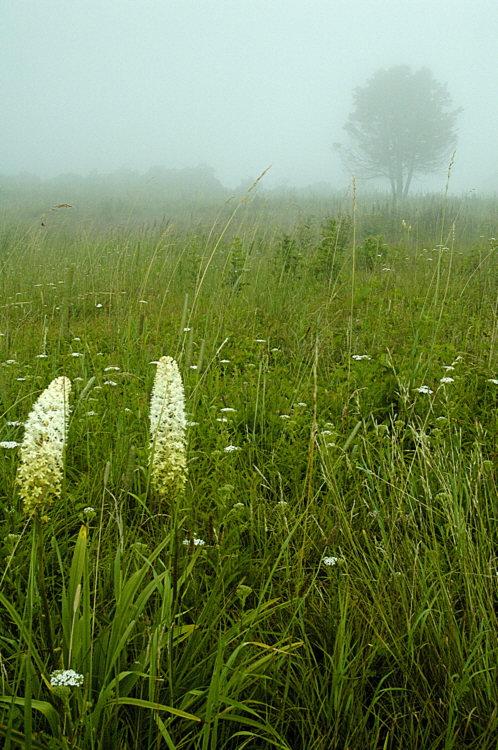 7/14/05 - Big Meadows Fog
