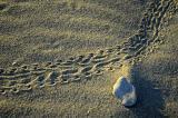 6/22/05 - Sand Tracks 1