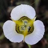 z White flower in MP RMNP.jpg