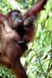 Borneo Trip May/June 2005
