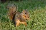 by000_25_Squirrel.jpg