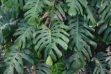 tree leaf_9625