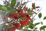 flower_9350