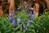 flower_9463