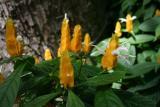 flower_9619