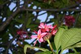 flower_9771