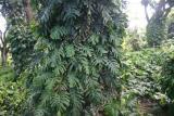 tree_9624
