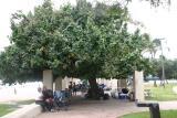 tree_9348
