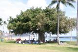 tree_9353