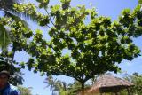 tree_9560