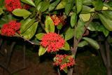 flower_9784
