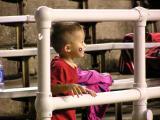 Young Utah Fan