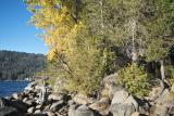 IMG03399.jpg Donner Lake