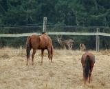 Deer & Horses