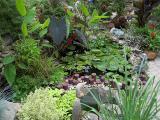 Gisela & Jim's Pond