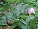 2005-06-06* Wet