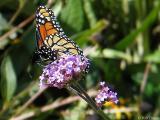 2005-09-03 Butterfly