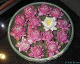2005-09-15 Blossoms