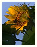 Gathering Nectar(07.27.05)