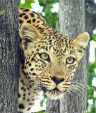 African Wildlife 2004