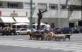 Dog Walkers