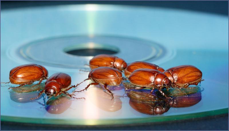 A British Invasion of Beetles *