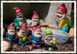A Hi Ho Of Garden Gnomes *
