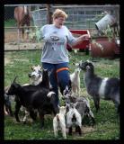 A Goosing of Goats *