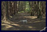 woodland shade