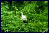 the rabbit-hunter