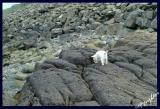 looking for dinosaur footprints