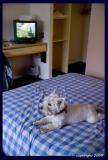 testing the hotel mattress