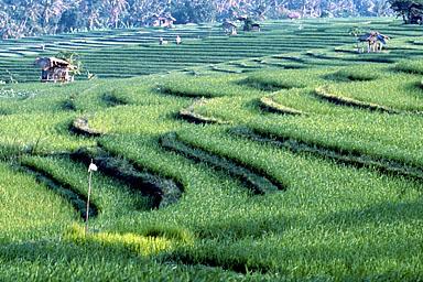 INDO_0159.jpg