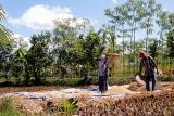 Lombok rice farmer #1