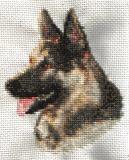 German Shepherd-23