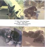 Lita-9M71 & U-Tapao Puppies-2