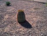06-Phoenix-Tucson Kennels-04