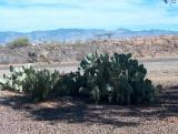 06-Phoenix-Tucson Kennels-05