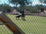 06-Phoenix-Tucson Kennels-11